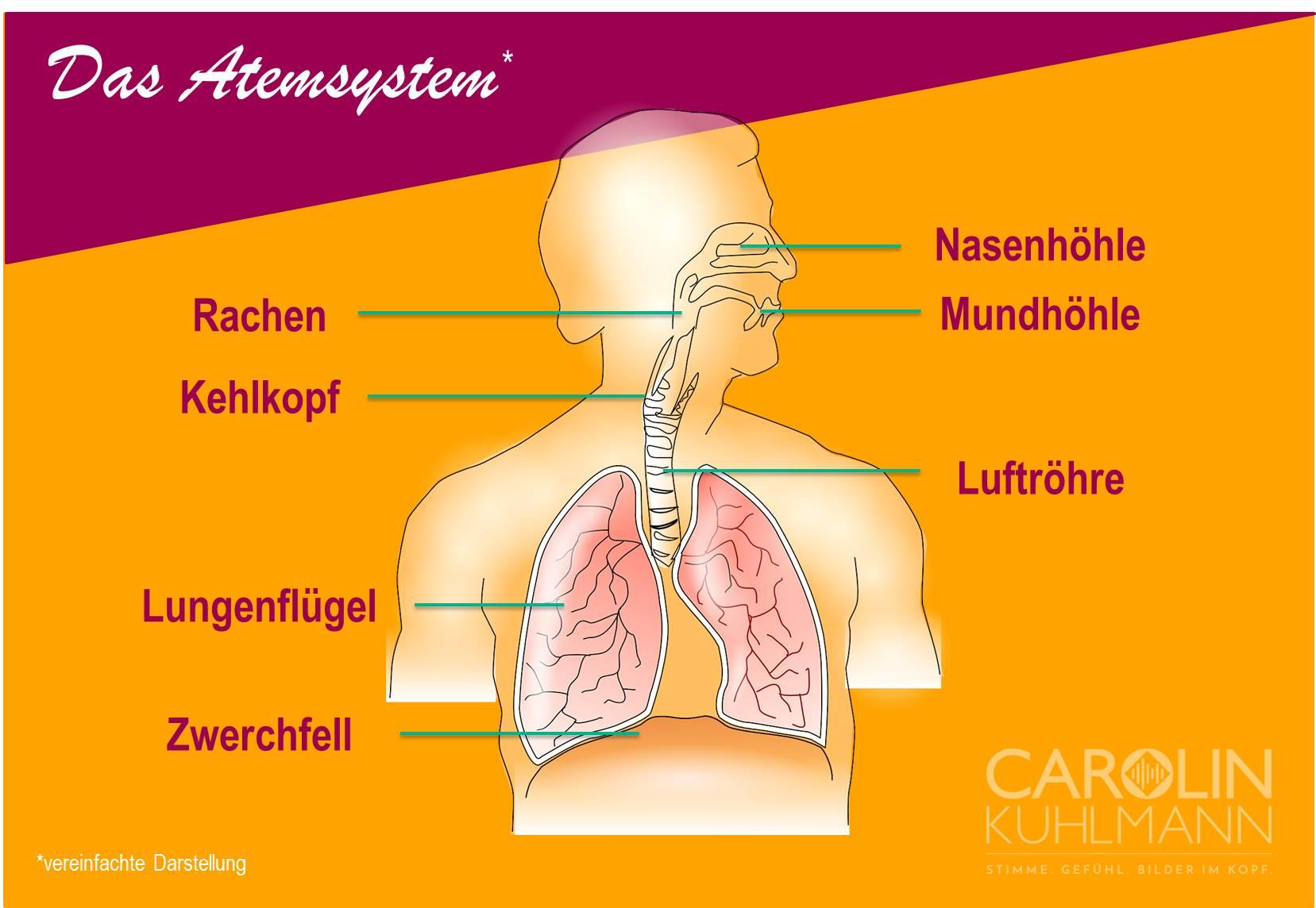 Infografik über das Atemsystem